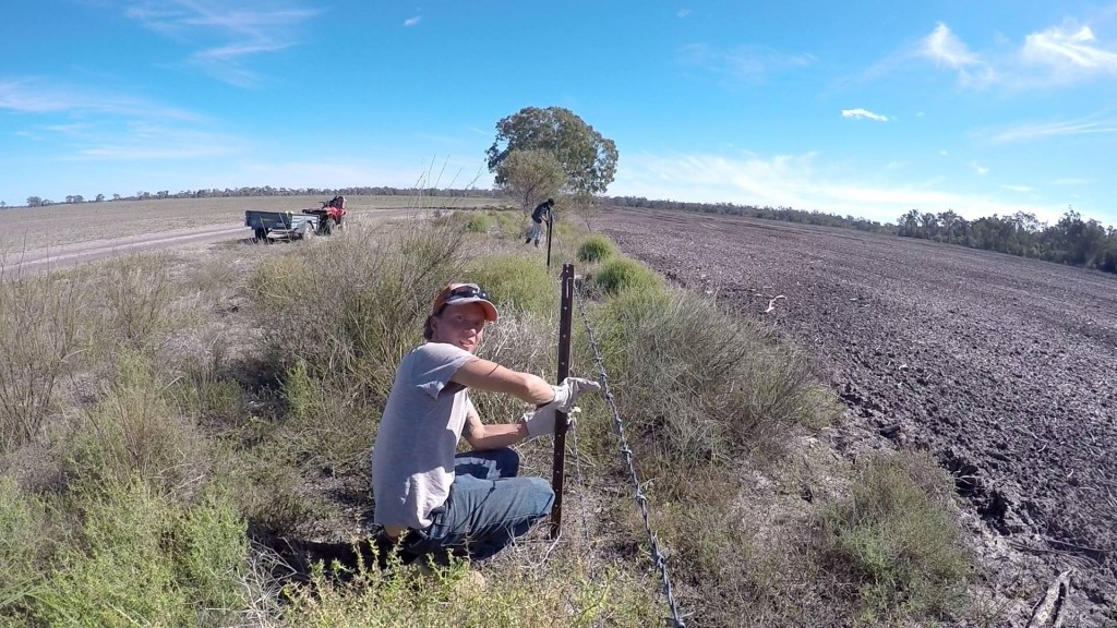 Fencing im outback australiens