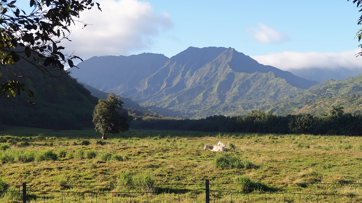Kauai Fieldwork Hawaii