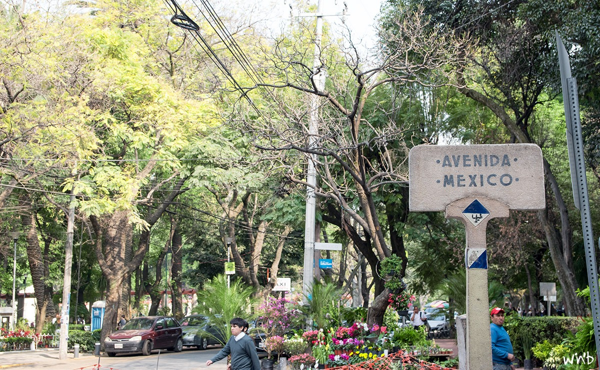 Avenida in Mexico City